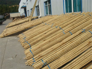 Bambusové tyče prodej